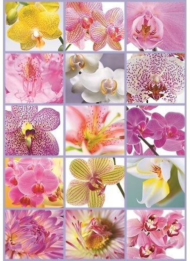 Educa 1500 Parça Puzzle Collage Of Flowers-Educa